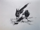 'all black and white thievery - one for sorrow, two for sorrow', conte and pastel on paper, 30 x 40cm